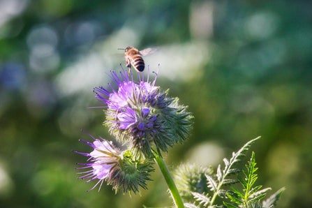 Pesticides might be worse for bees than we thought