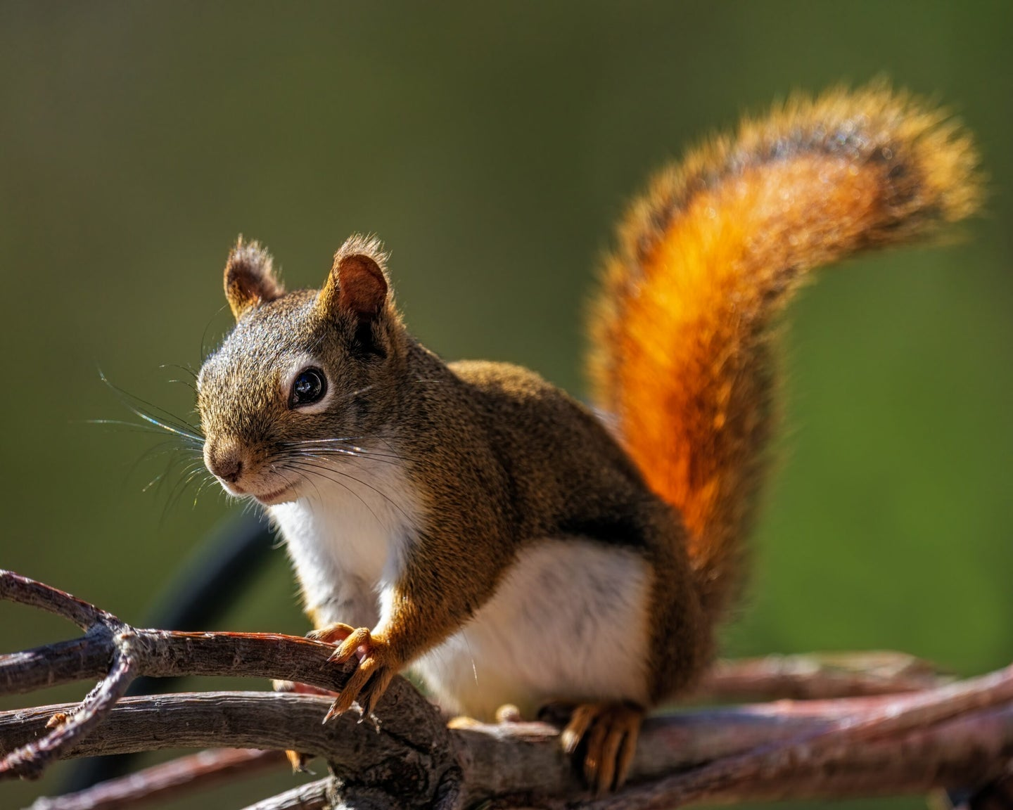 Squirrel climbing on a branch