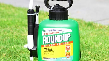 Roundup herbicide bottle on lawn