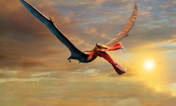 This dragon-like reptile once soared over Australia