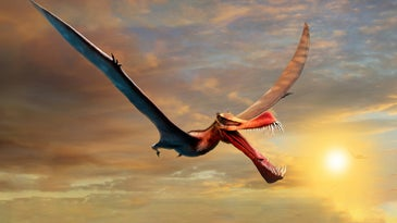 An artist's depiction of an extinct pterosaur, a flying reptile relative of dinosaurs.