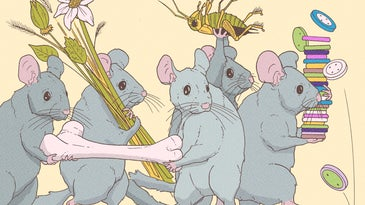 a colorful illustration of long-tailed gray rodents carrying assorted objects such as buttons, bones, bugs, and flowers