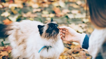 Keep your kitty engaged with the best cat treats.