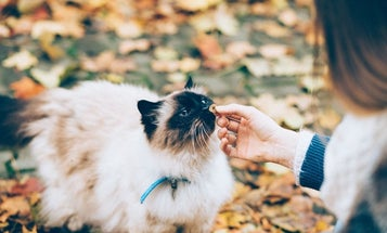 Best cat treats to engage and reward your pet