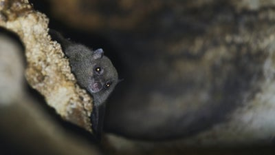 How to escort a bat out of your home