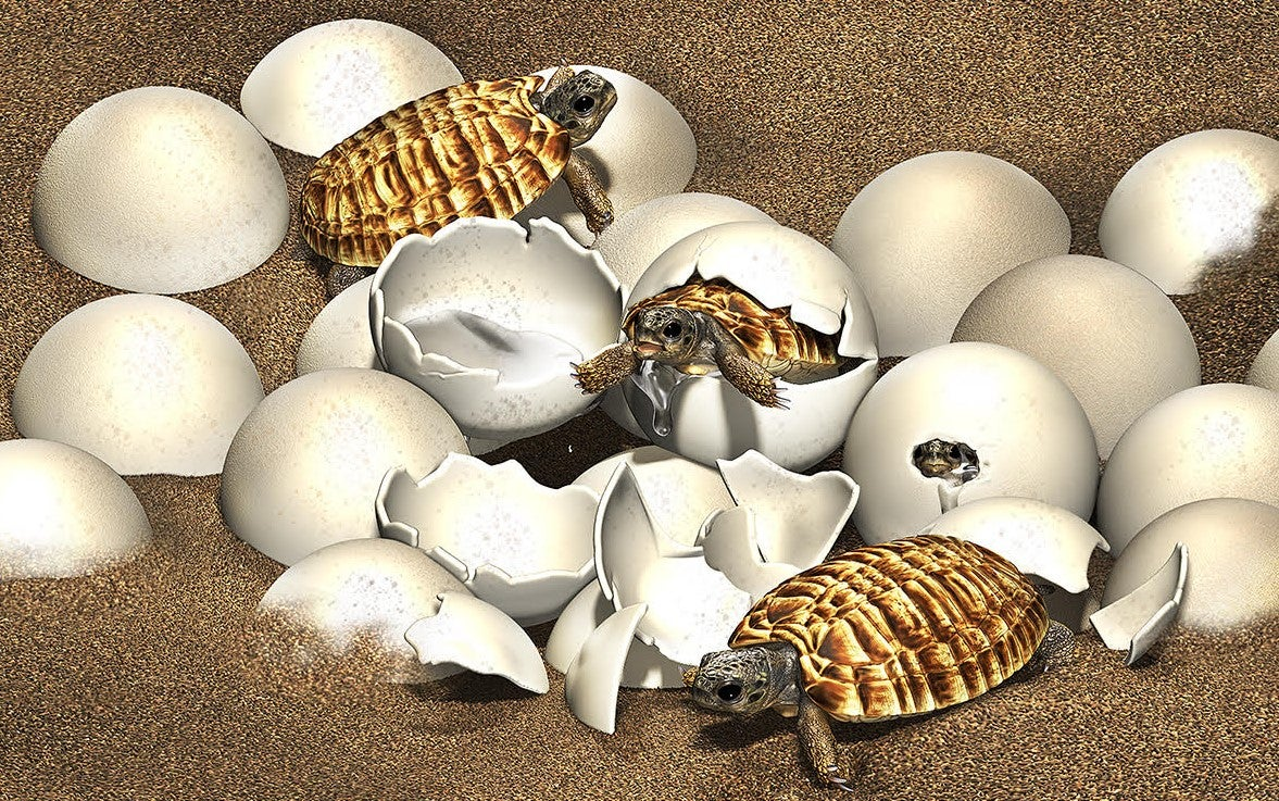 Ancient fossilized turtle egg found with embryo intact | Popular Science