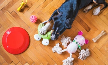 Best dog toys to keep your pet happy and healthy
