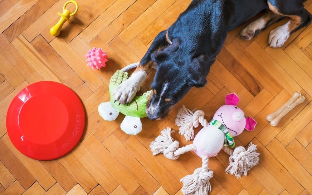 Keep your dog healthy and happy with the best dog toys.