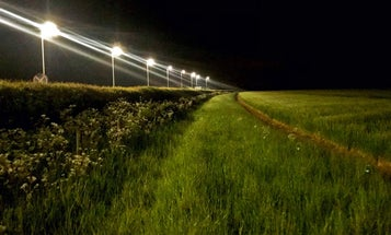 Streetlights are making caterpillars grow up faster—and that's a bad thing