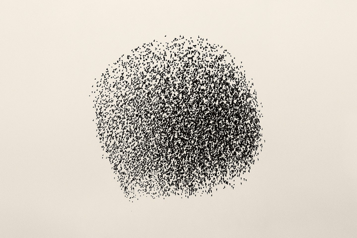 a murmuration of starlings form a large sphere