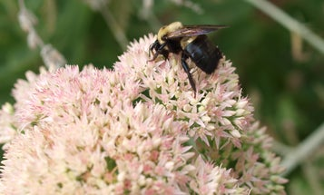 Simple ways to get carpenter bees to stop remodeling your home
