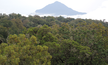 African rainforests are stronger carbon sinks than the Amazon