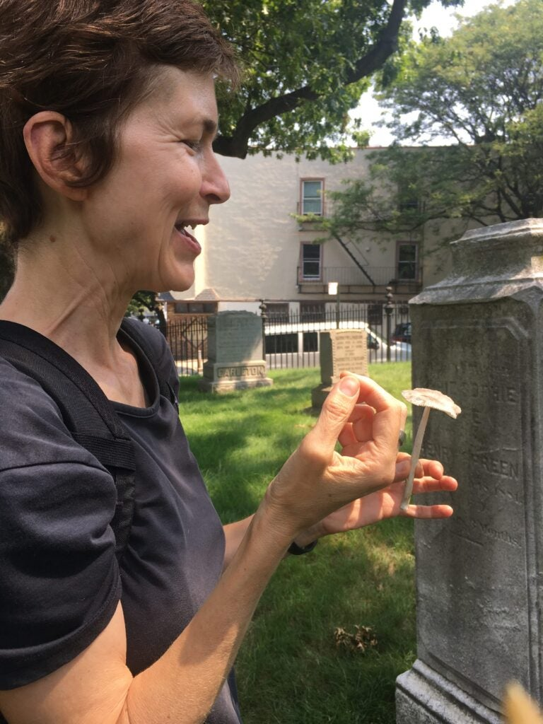 An urban cemetery is a surprising sanctuary for fantastic fungi