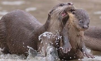 8 animals being naturally hilarious