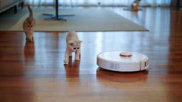 Roomba robot vacuum and pets.