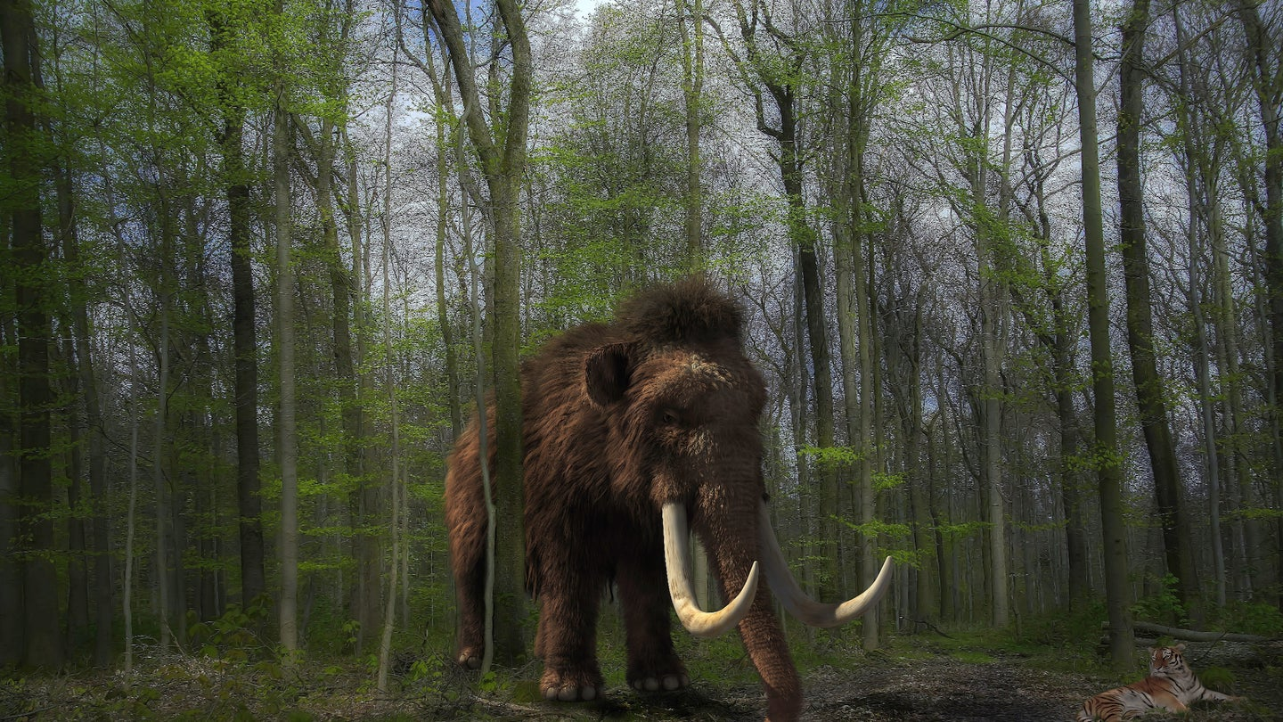 Rendering of mammoth in forest.