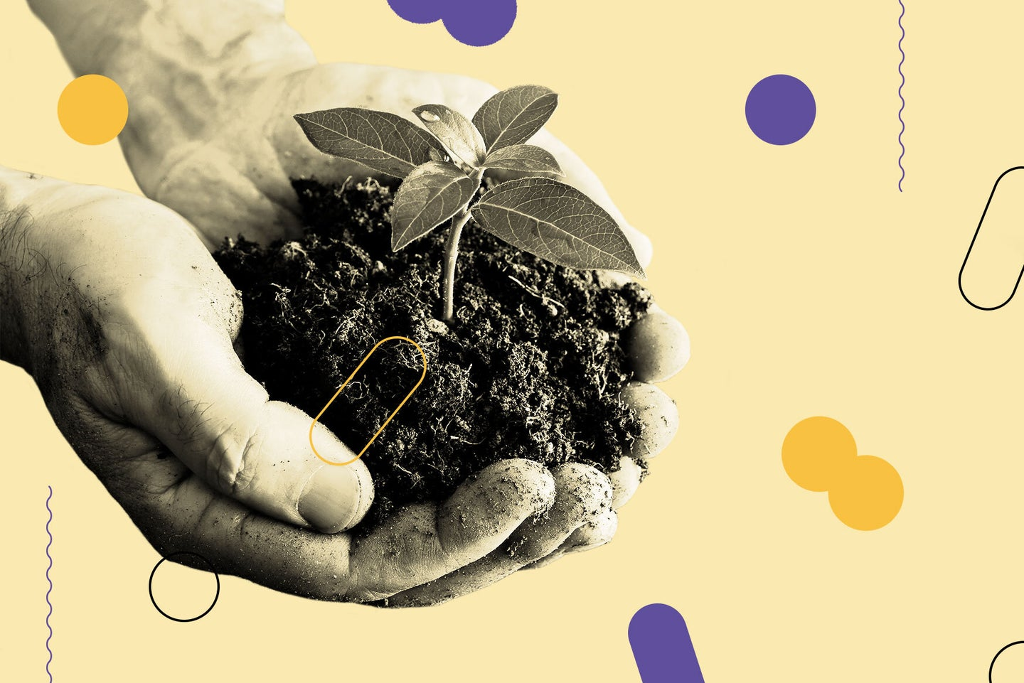 person's hands holding tiny plant growing out of soil
