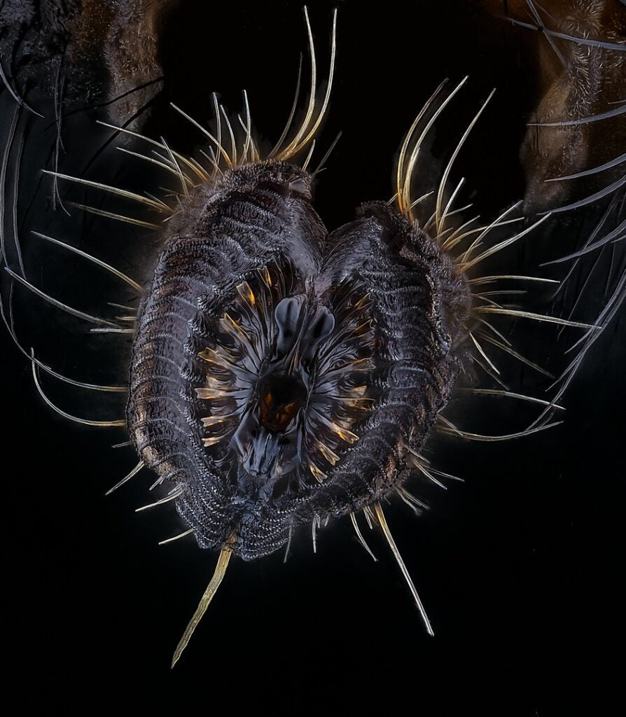 House fly mouth parts