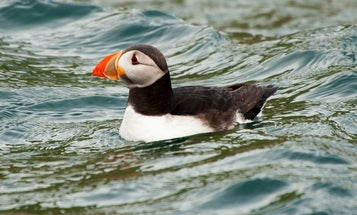 Cyclones can be fatal for seabirds, but not in the way you think