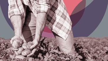 Farmer picking potatoes.