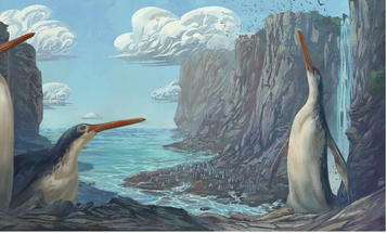 Schoolkids in New Zealand discovered a new species of giant penguin