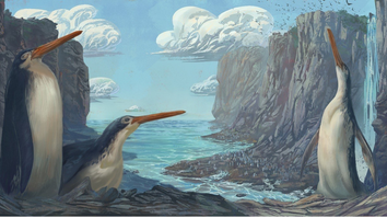 An illustration of an extinct species of giant penguins. Two penguins stand upright and one huddles down on a rocky island.