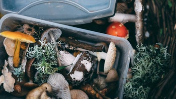 Container with mushrooms and vegetables