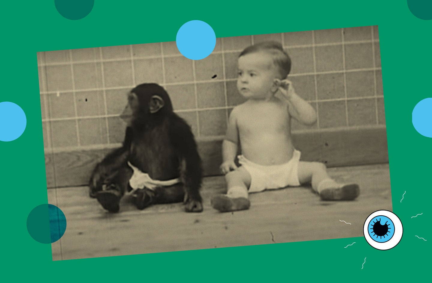 a baby chimp and baby human