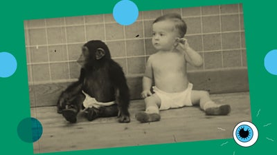 What scientists learned when they tried to raise a chimp with a human baby
