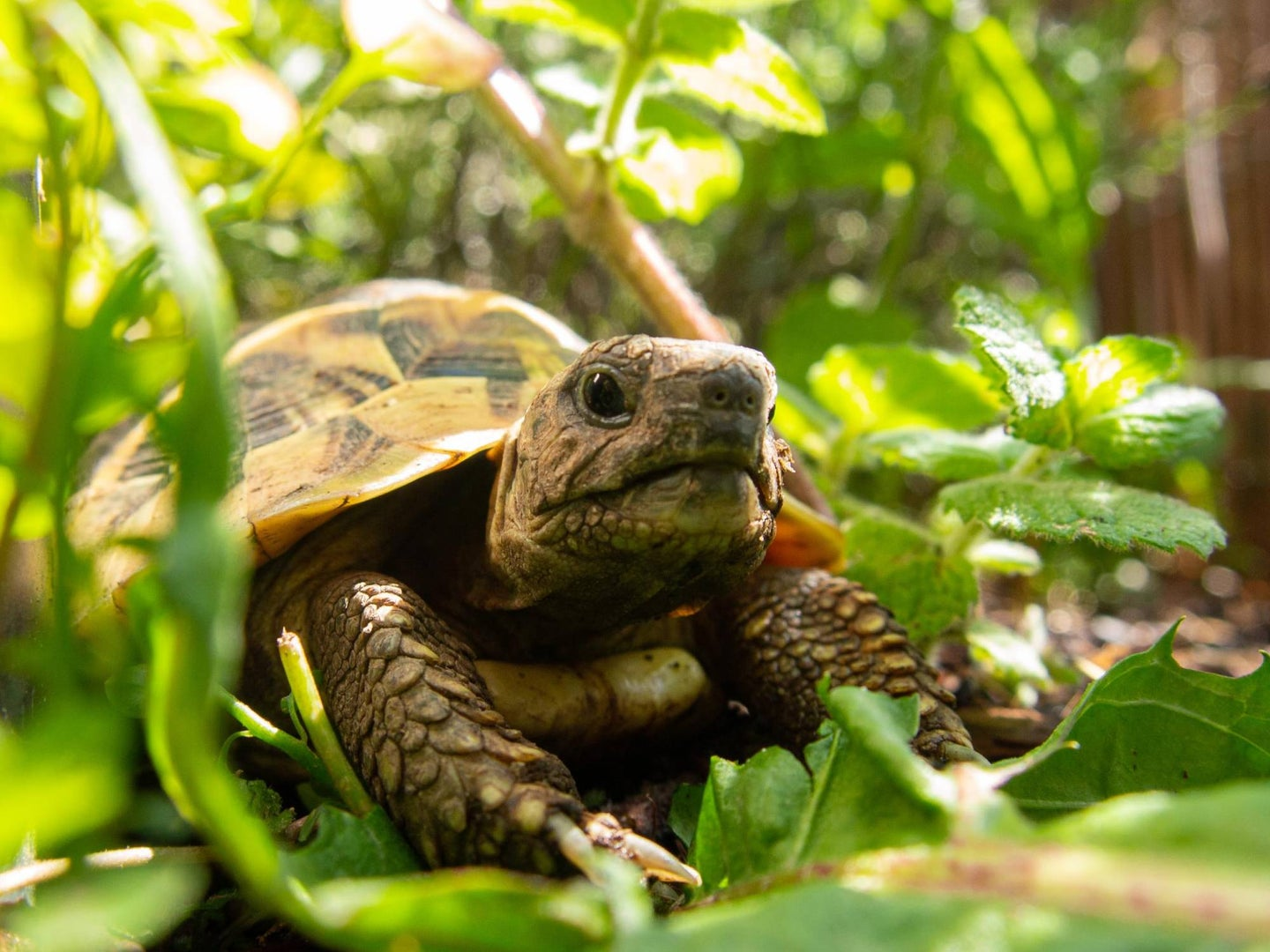 Tortoise on the ground surrounded by plants