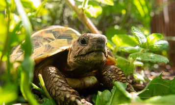 How to turn your garden into a tortoise sanctuary