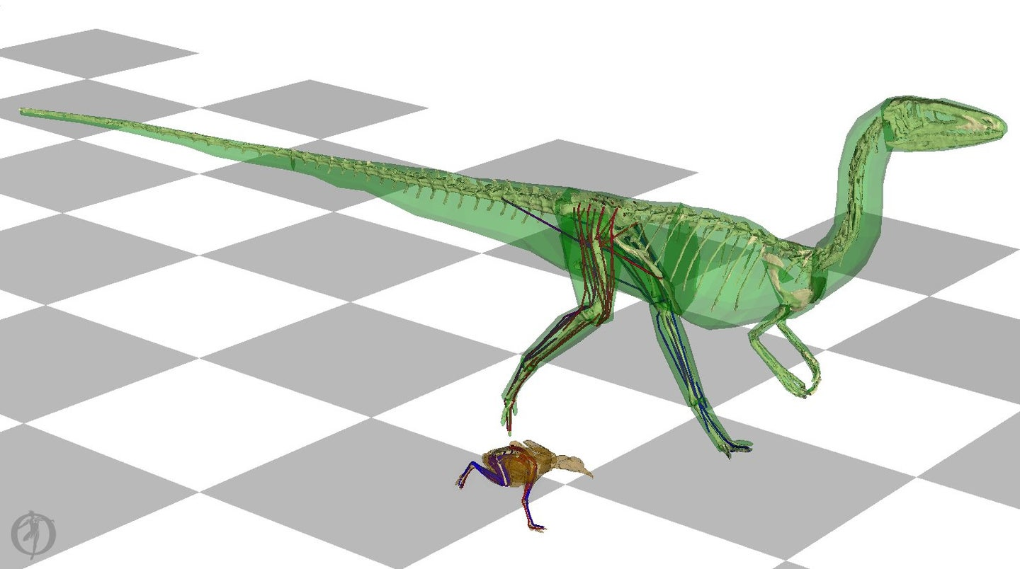 An illustration of a 2-legged dinosaur running beside a small brown bird, on a checkered background. Their skin is see-through, revealing bones and tendons.