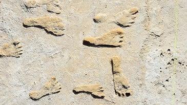 fossilized human footprints