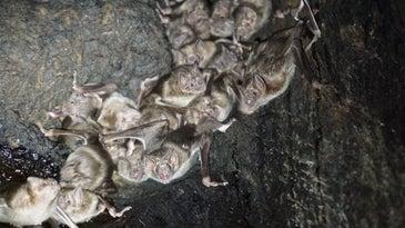 vampire bats hanging inside a tree