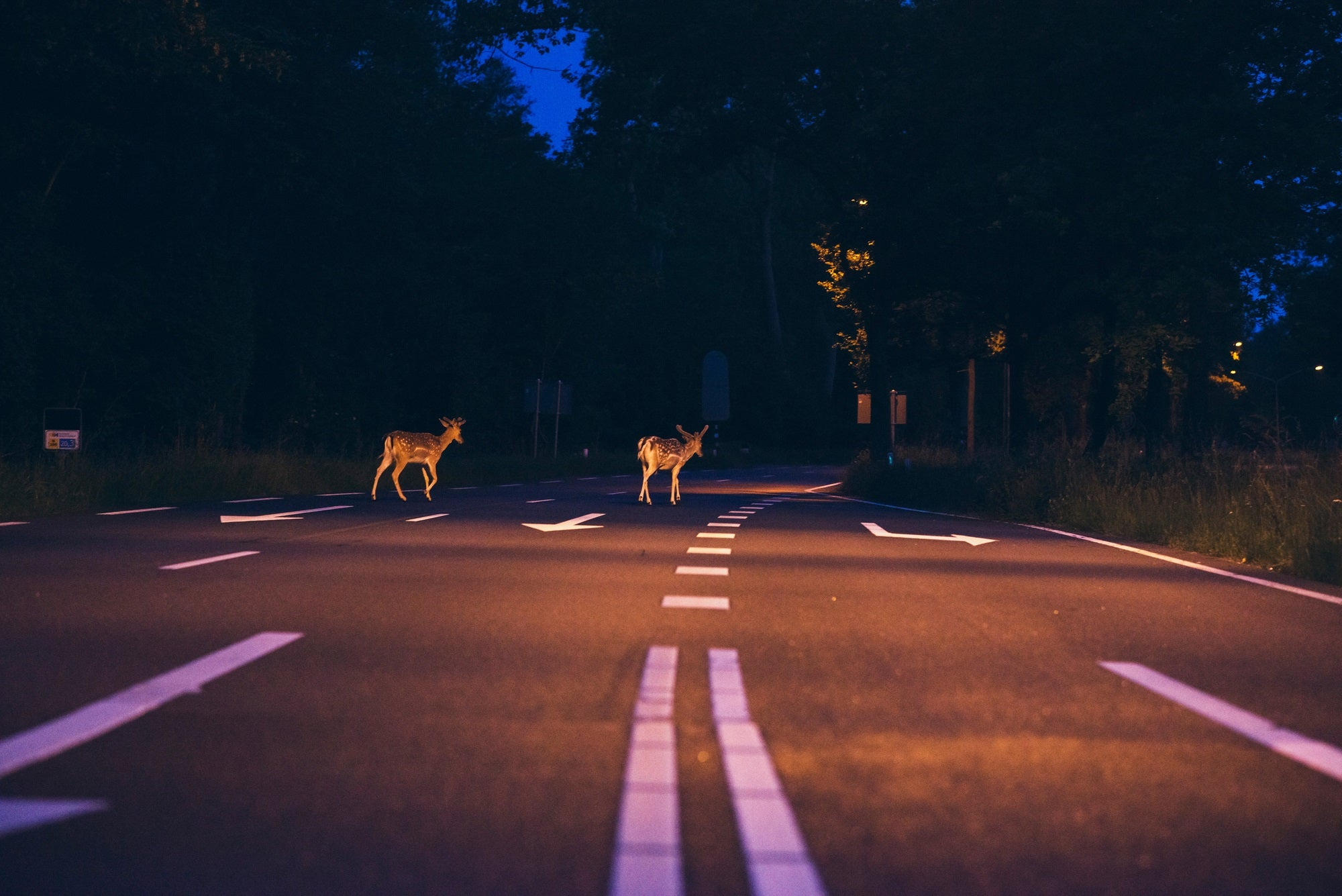 These are the days in the year you're more likely to hit a deer thumbnail
