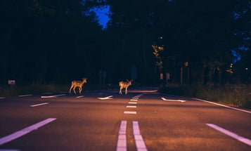 These are the days in the year you're more likely to hit a deer