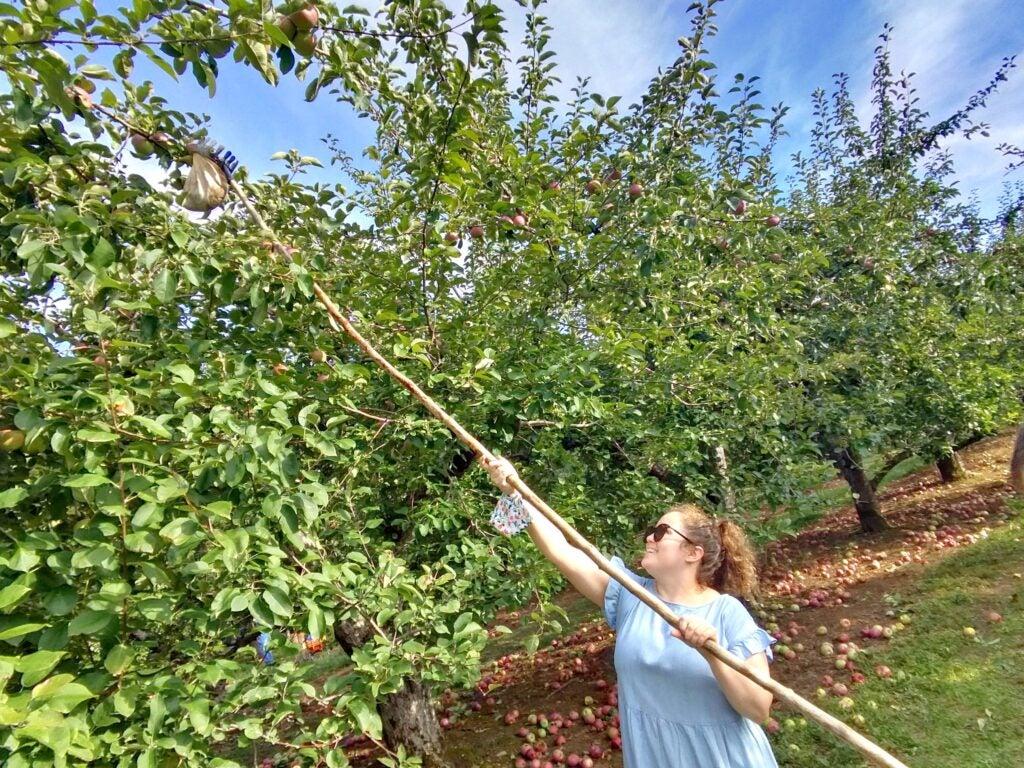 A woman apple picking, wearing Ray-Ban smart glasses.