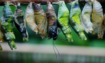 City lights could trigger a baby boom for some moths and butterflies
