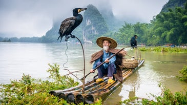 Chinese fisher with two cormorant birds in a boat in front of a mountain