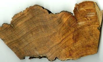 300 years of tree rings show just how badly hurricanes have soaked the Carolinas