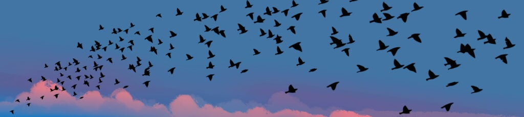 an illustration of small dark birds flying into the sunset