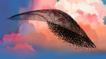 an illustration of a huge group of small dark birds flying in a cloud-like formation against a colorful sunset