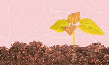 Quick and dirty tips to make sure your plants love the soil they're in