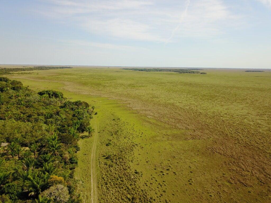 forest island in the llano de mojos grassland