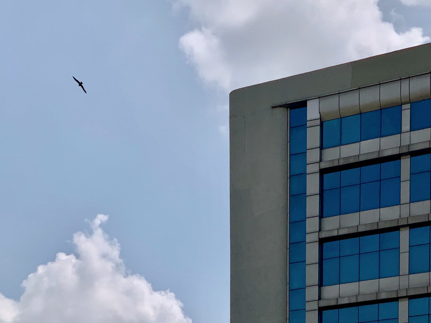 A bird flying near a concrete commercial building with large windows on a sunny day.