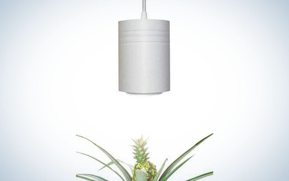 Small White Aspect Luxury LED Grow Lights are the best for succulents.