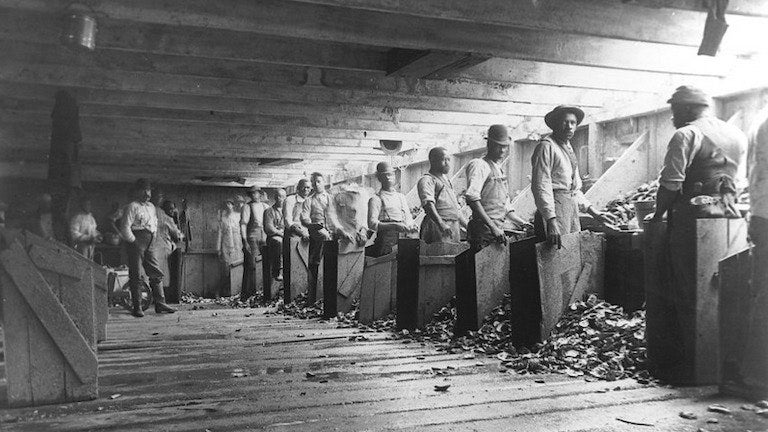 Black oyster farmers in a wooden shelling facility in Staten Island