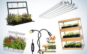 The best grow lights to keep our plant friends happy and healthy