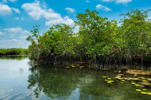 This secret mangrove forest is unlike any other in the world