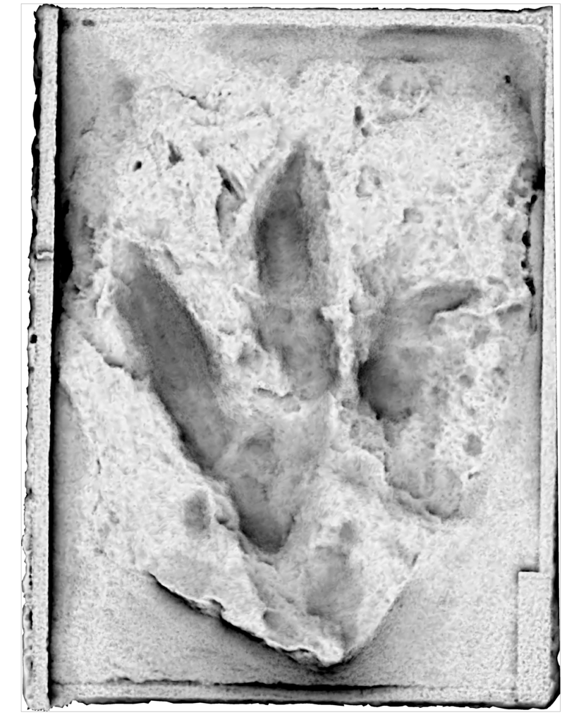 Cast of fossil footprint of Triassic dinosaur found in Australia in the 1960s